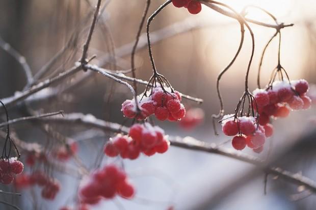 berries-1148973_640