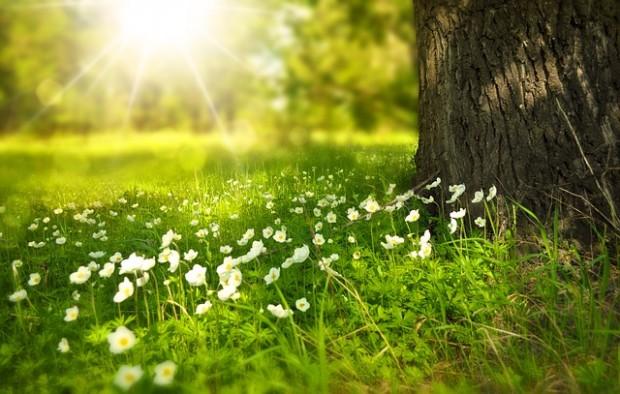 spring-276014_640 (1)