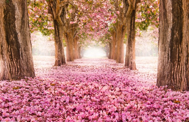 Romantic flower tunnel