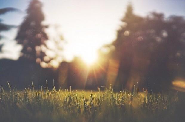 grass-455753_640 (2)