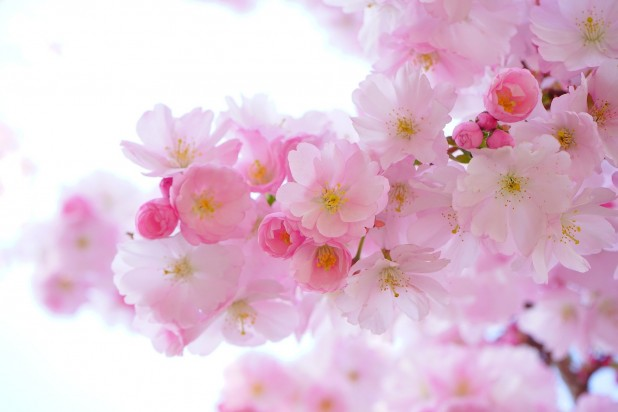 pink-324175_1920